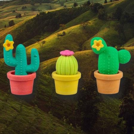 Roliga sudd - Kaktusar