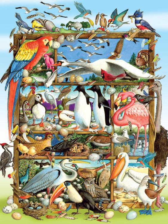 Världens fåglar - Pussel för hela familjen (350 bitar)