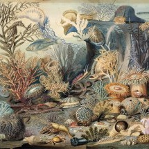Pussel - Havets botten (1000 bitar)