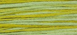 WDW 2206 Pistachio