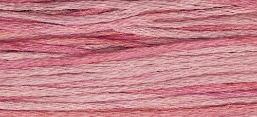 WDW 2276 Camellia