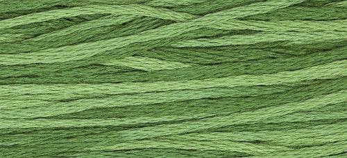 WDW 2168 Monkey Grass