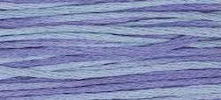 WDW 2342 Dutch Iris