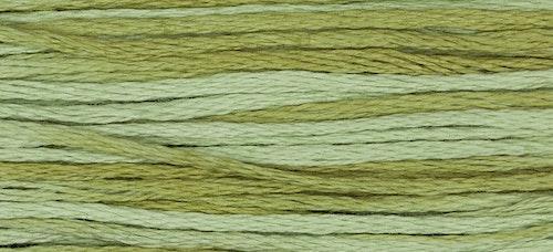WDW 1191 Dried Sage