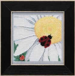 Mill Hill -  Ladybug on Daisy (2021)