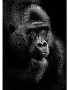 Poster Thinking gorilla miljövänligt papper