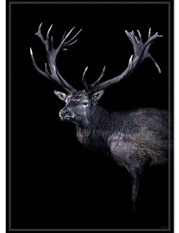 Poster Rådjur, dansk fotokonst på miljövänligt papper.