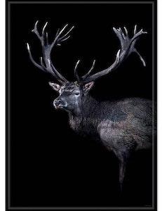 Poster Dear red deer miljövänligt papper