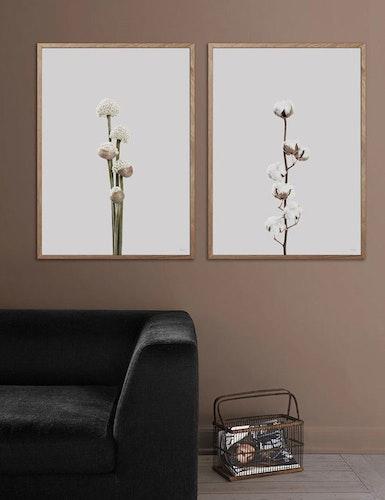 Poster Cotton flower, FSC papper