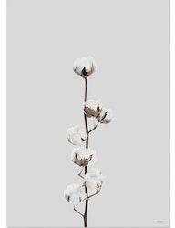 Poster Cotton flower miljövänligt papper