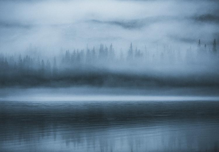 Tapeter med skogsmotiv. Scandinavian Nature - Hidden Forest.