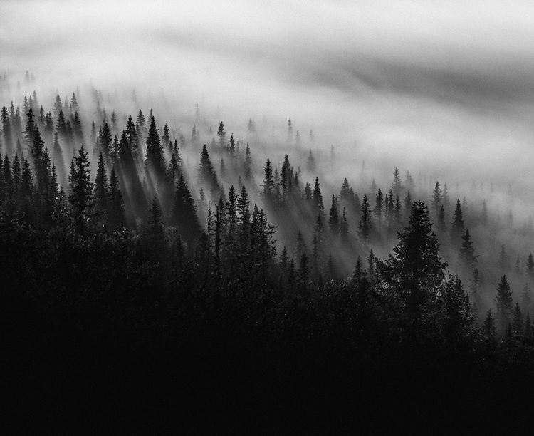 Scandinavian Nature - Misty Trees