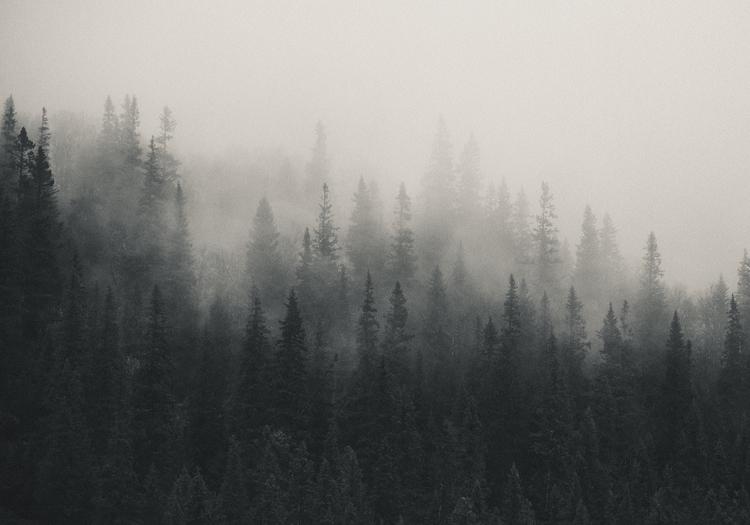 Scandinavian Nature - Fading mist