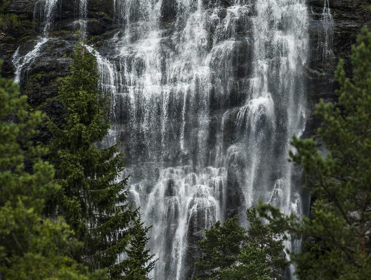 Scandinavian Nature - Vattenfall med träd