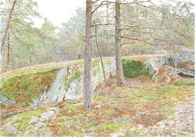 Bergaskogen 1