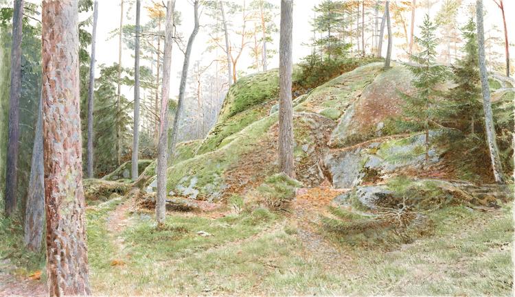 Bergaskogen 2