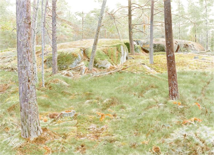 Bergaskogen 4