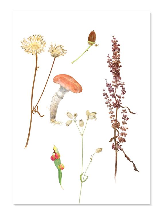 Akvarellpoem: Rosenslemskivling