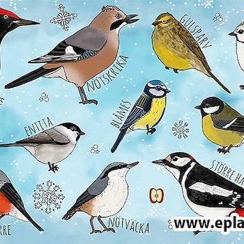 Vykort Vinterfåglar