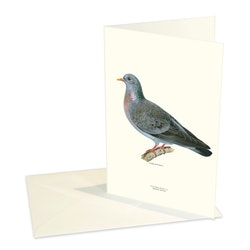 Forest pigeon