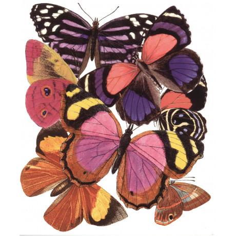 Dubbelkort Fjärilar