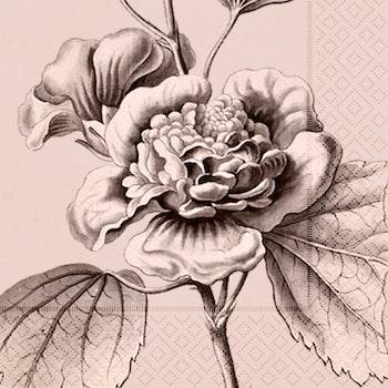 Servett Botaniska