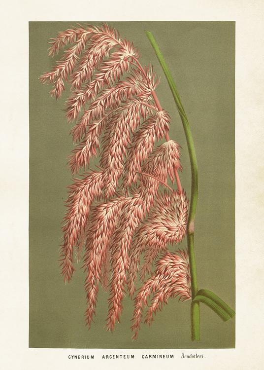Grön och rosa Poster 70*50