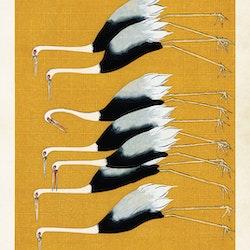 Gul stork Poster 70*50