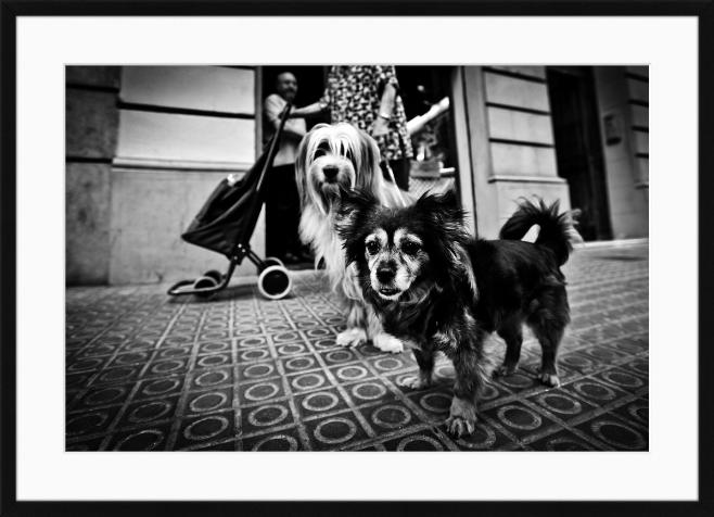 Barcelona dog  / Fotografi