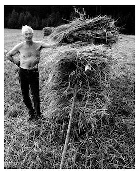 Bonden vid korn härssja / Poster Fotografi