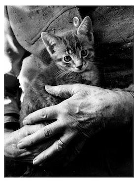 Veras katt / Poster Fotografi