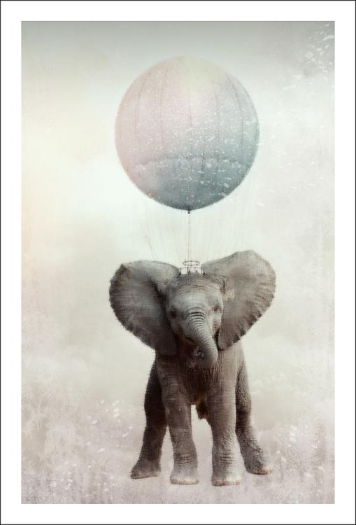 """Elephant In Air"""