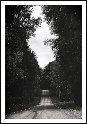 """Forest road"""