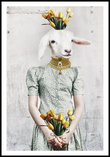 """""""From like a lamb"""""""