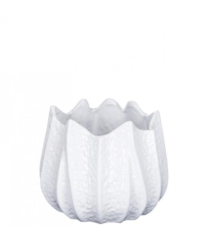 Skål - Fynn White