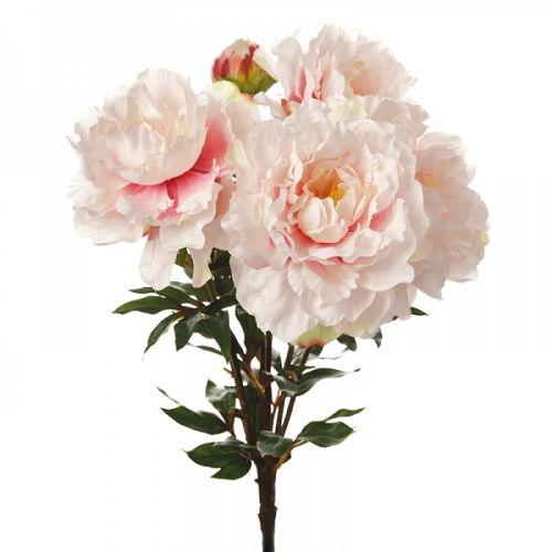 Sia - Pion (rosa)
