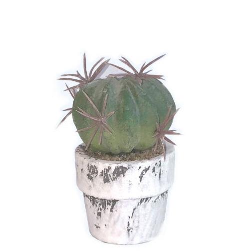 Sia - Minikrukväxt bollkaktus