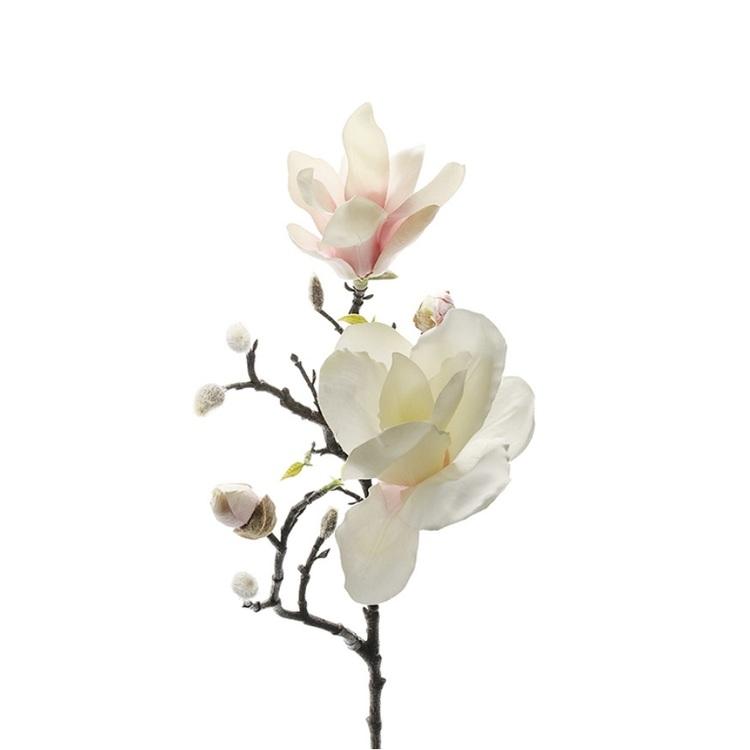 vacker Magnolia på kvist från Mr Plant
