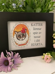 Tavla, katt med orange