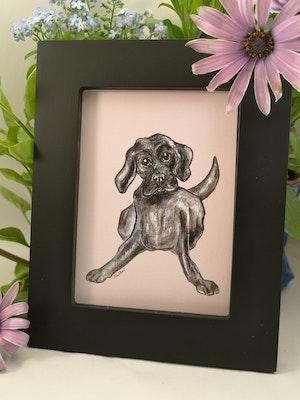 Tavla, svart hund