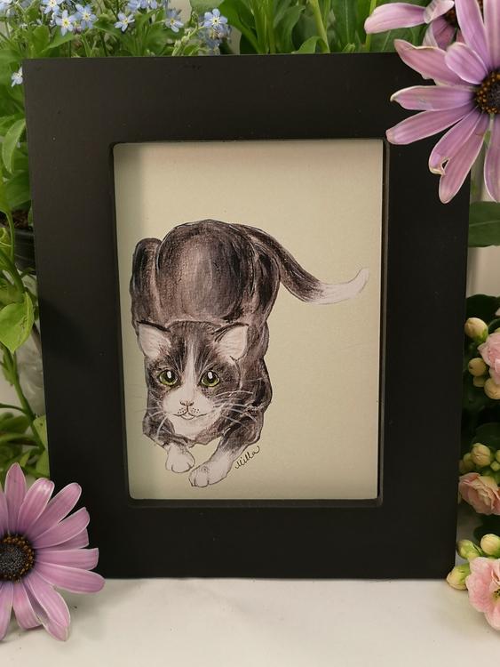 Tavla, svart & vit katt