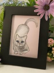 Tavla, ljusgrå katt