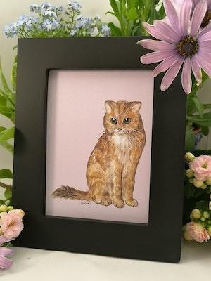Tavla, brun katt
