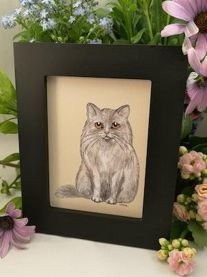 Tavla, grå katt