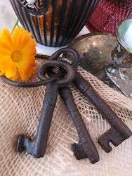 Nyckelknippa, liten