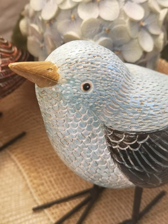 Fågel, blå