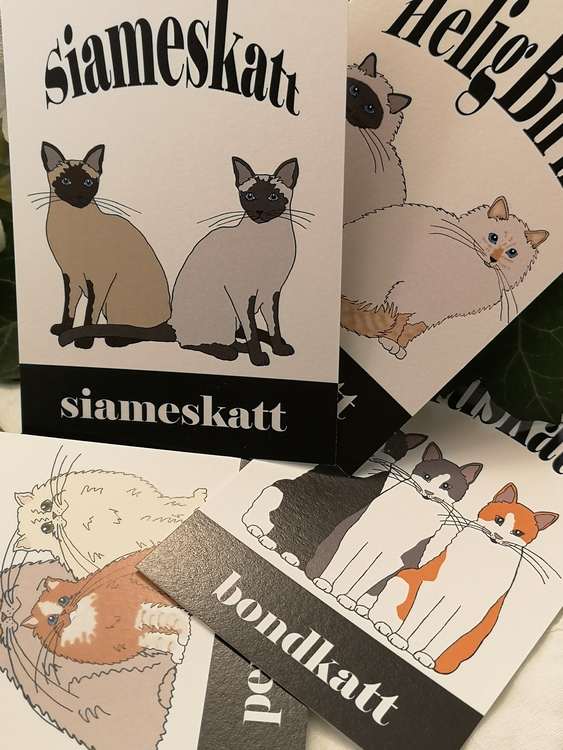 Vykort, katter i fyra raser
