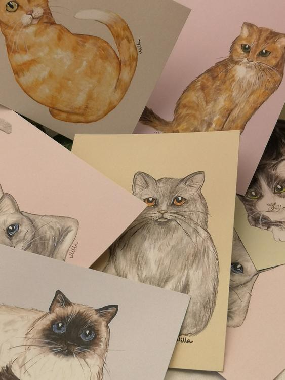 Vykort, Katter
