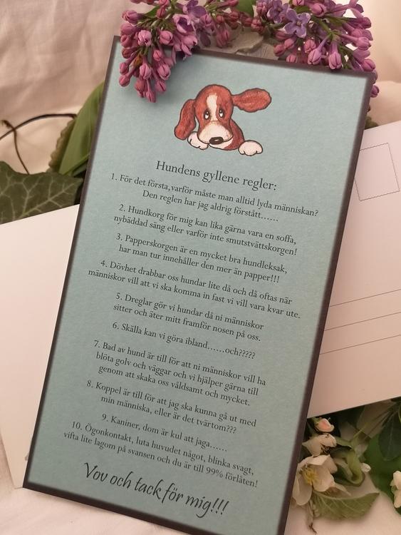 Kort, hundens regler