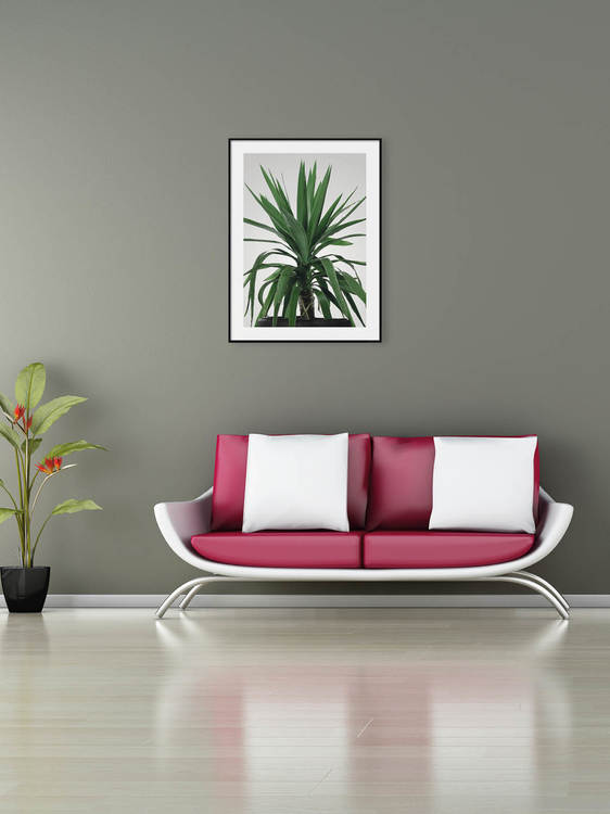 Poster Yucca Palm